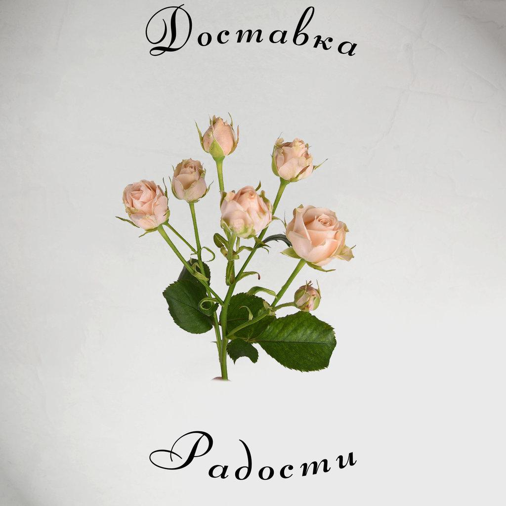 Роза кустовая кремовая 60 см в Доставка Радости