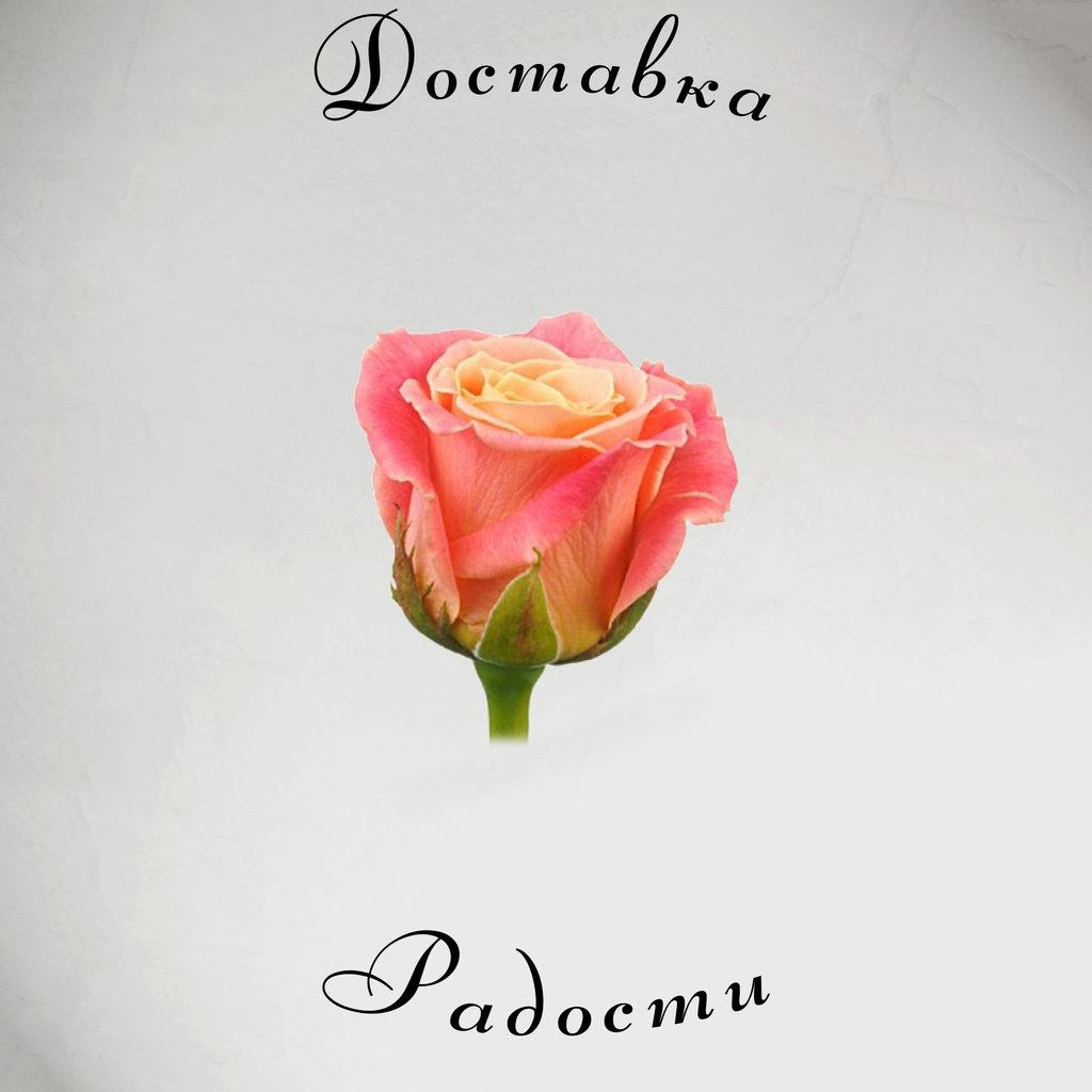 Роза лососёвая 70 см в Доставка Радости