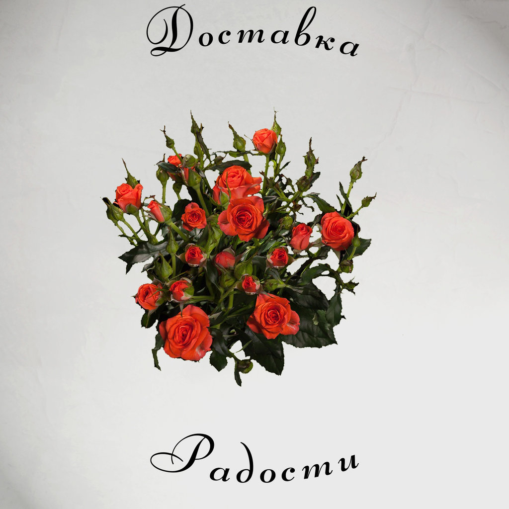 Роза кустовая оранжевая 70 см в Доставка Радости