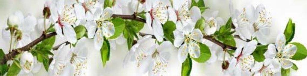 Фартуки ЛакКом 4 мм.: Цветущий сад №2 в Ателье мебели Формат