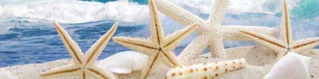 Фартуки ЛакКом 4 мм.: Морская звезда в Ателье мебели Формат