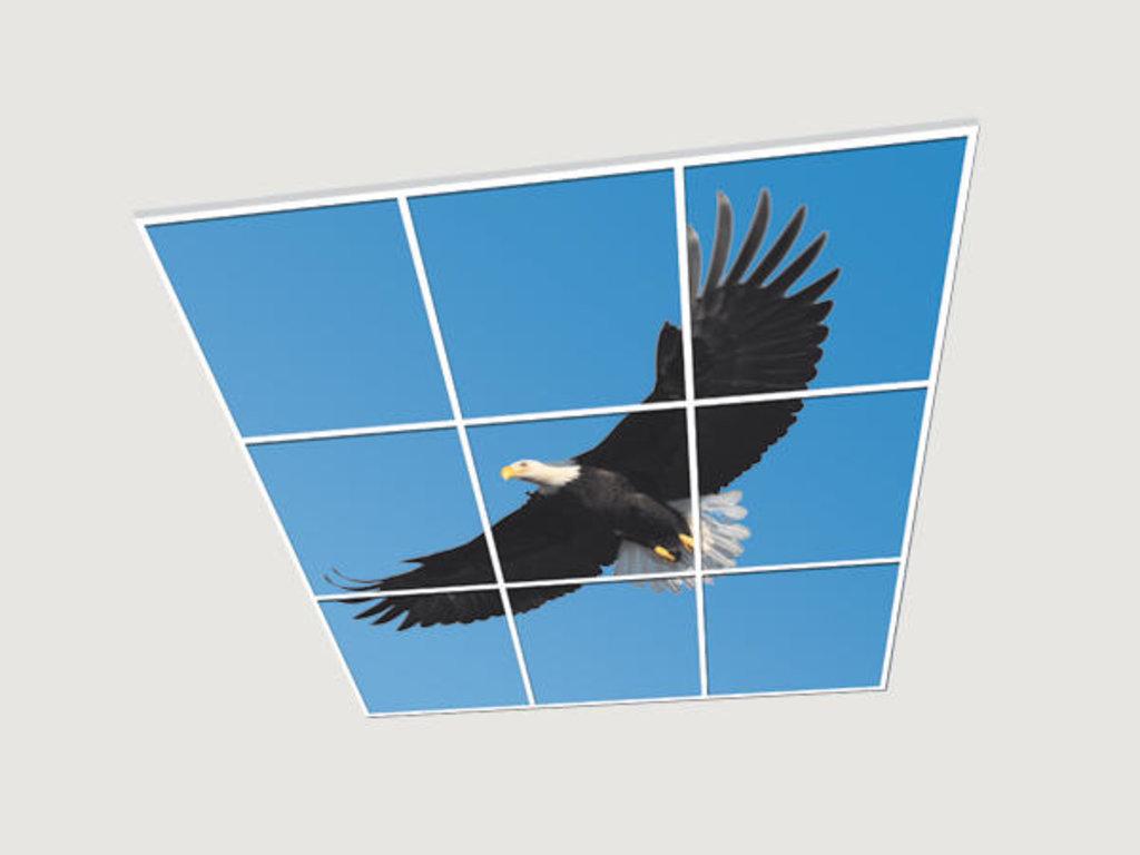 Витражные (стеклянные) потолки: Серия «Птицы» в Мир Потолков