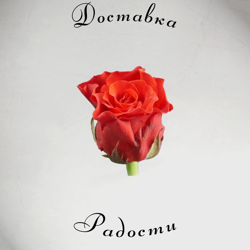 Роза оранжевая 70 см в Доставка Радости