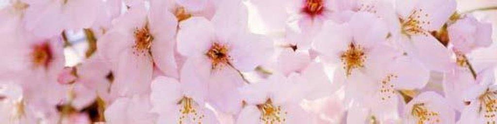 Фартуки ЛакКом 4 мм.: Цветущий сад №3 в Ателье мебели Формат