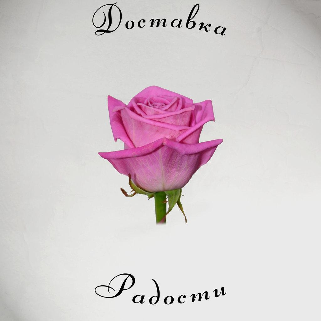 Роза розовая 50 см в Доставка Радости