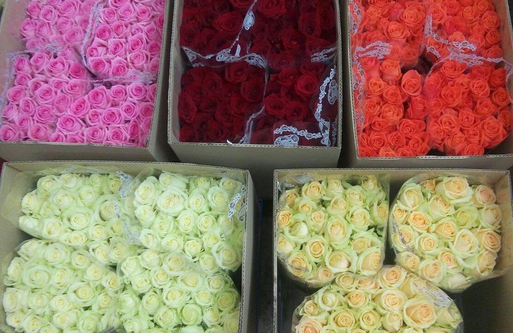 Покупка цветов оптом екатеринбург, красный клевер цветки купить