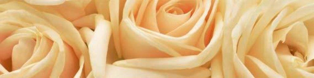 Фартуки ЛакКом 4 мм.: Чайная роза в Ателье мебели Формат