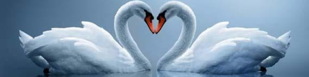 Фартуки ЛакКом 4 мм.: Лебеди в Ателье мебели Формат