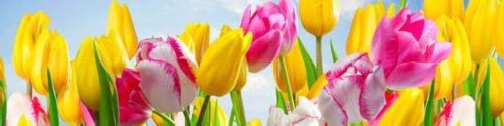 Фартуки ЛакКом 4 мм.: Тюльпаны в Ателье мебели Формат