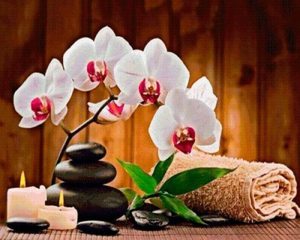 Картины по номерам: Картина по номерам Paintboy 40*50 Белая орхидея GX4440 в Шедевр, художественный салон