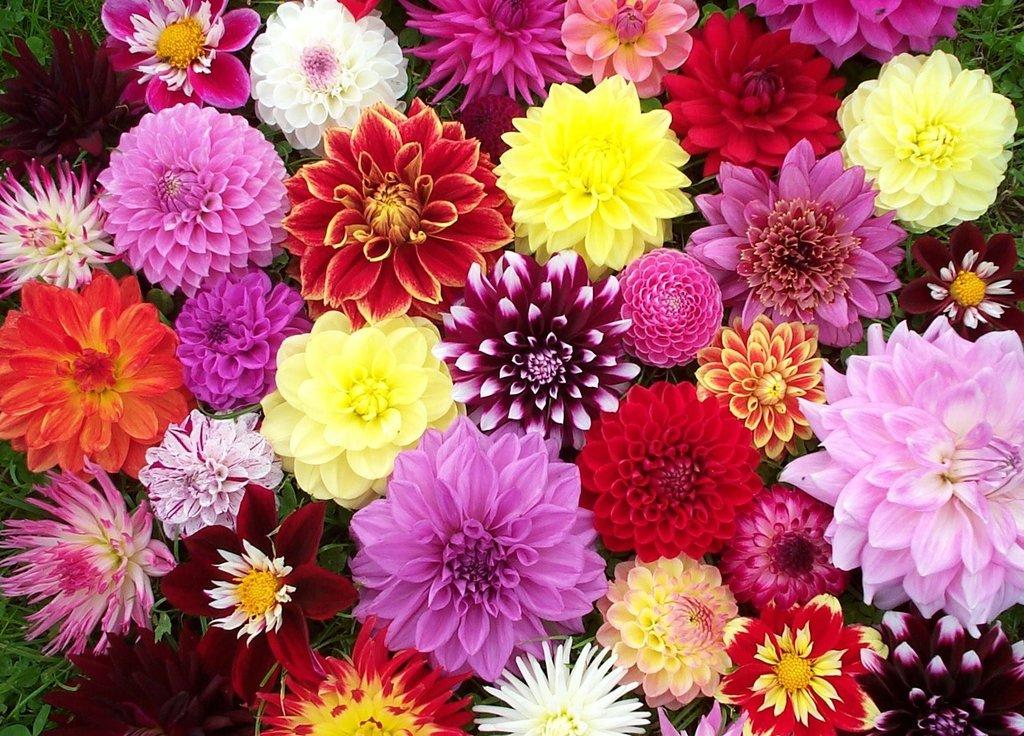 Цветы, деревья, кустарники: Однолетние цветы в Монстэра, Тепличное хозяйство