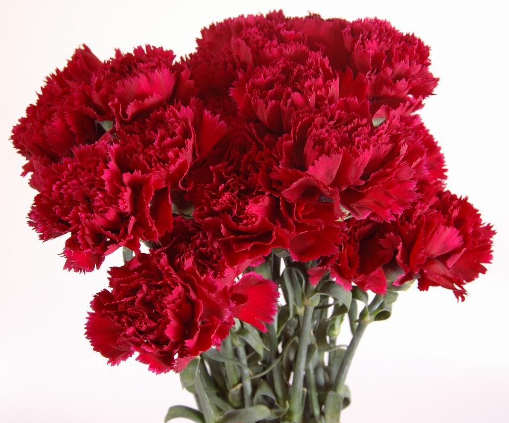 Цветы: Гвоздики красные в Николь, магазины цветов