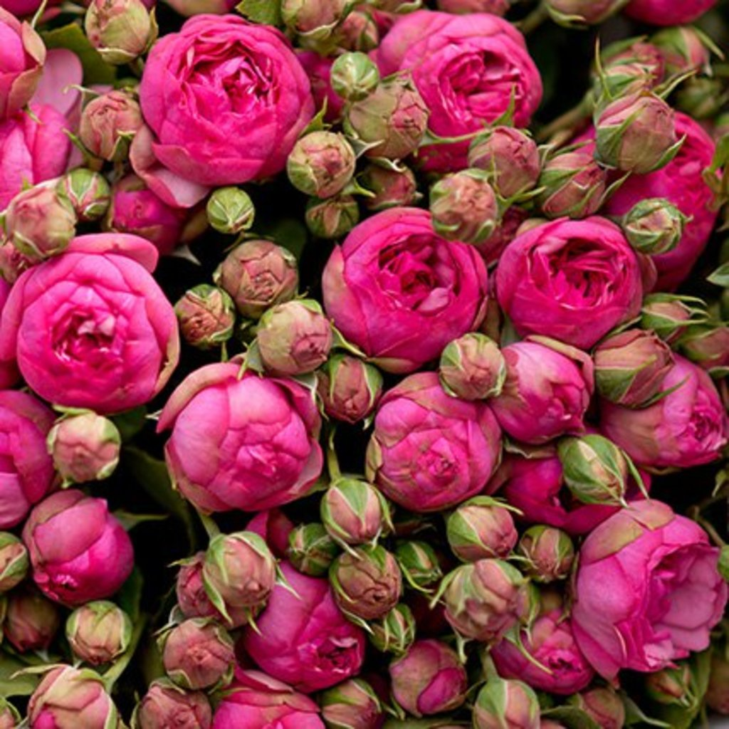 """Кулек крафт: """"Кулек Крафт"""" Пионовидная роза в Botanique №1,ЭКСКЛЮЗИВНЫЕ БУКЕТЫ"""