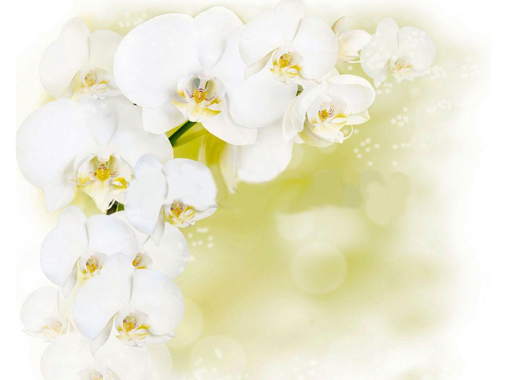 Панели Novita: Декоративный потолок Белая орхидея NOVITA в Мир Потолков
