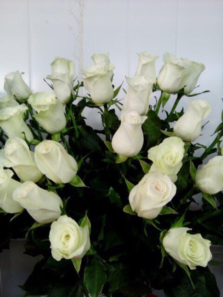 Цветы: Розы в Николь, магазины цветов