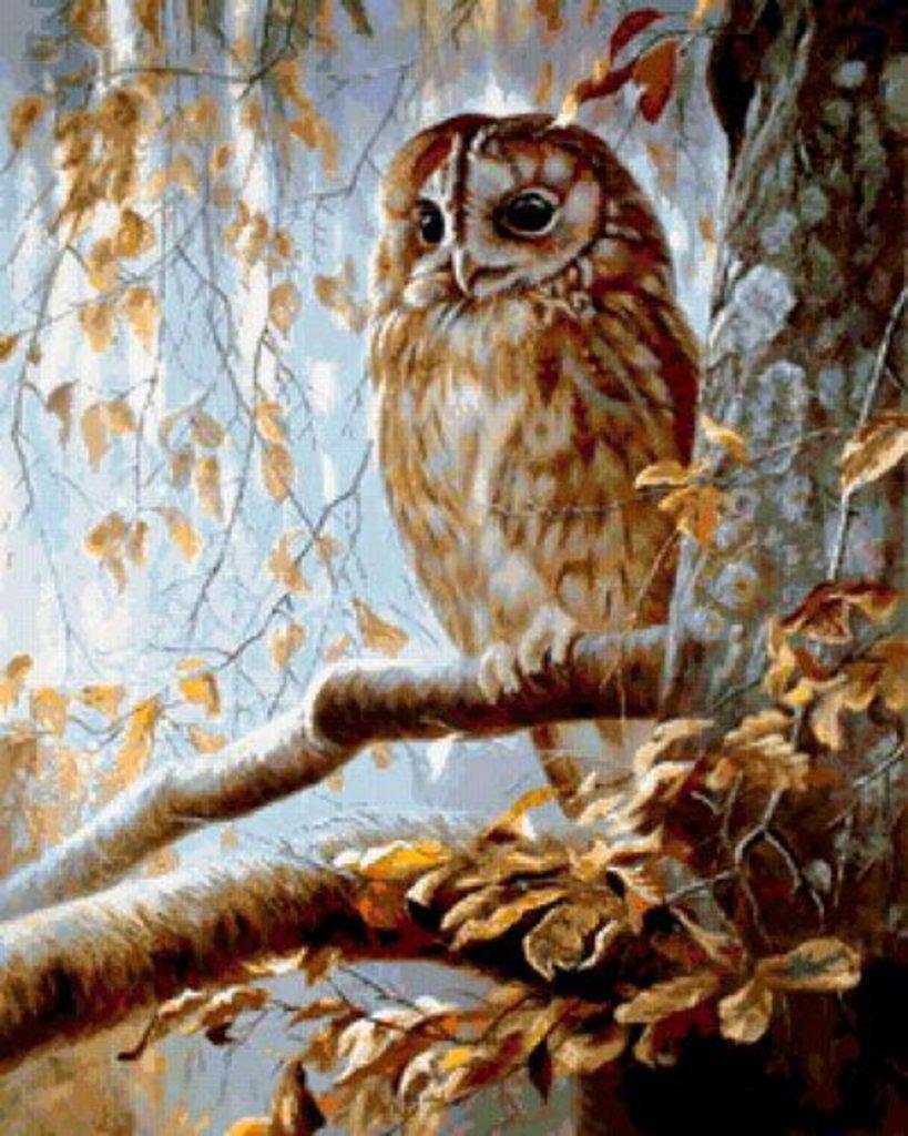 Картины по номерам: Картина по номерам Paintboy 40*50 Сова на ветке  GX72902 в Шедевр, художественный салон
