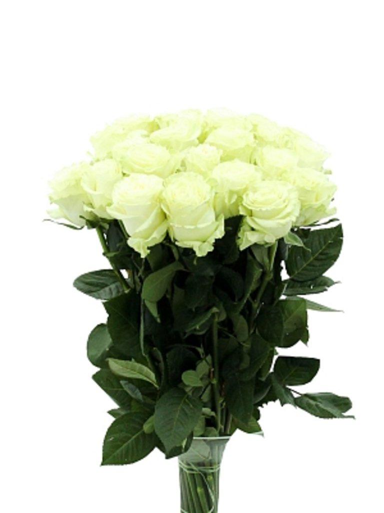 Цветы: Розы Белые в Николь, магазины цветов