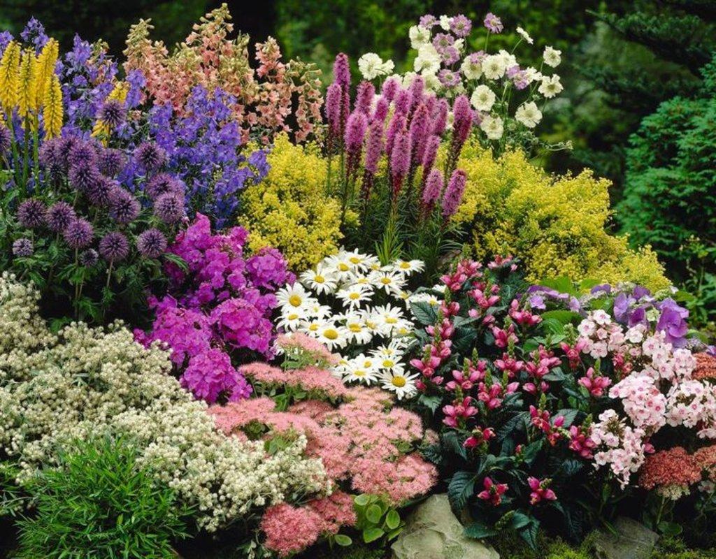 Цветы, деревья, кустарники: Многолетние цветы в Монстэра, Тепличное хозяйство