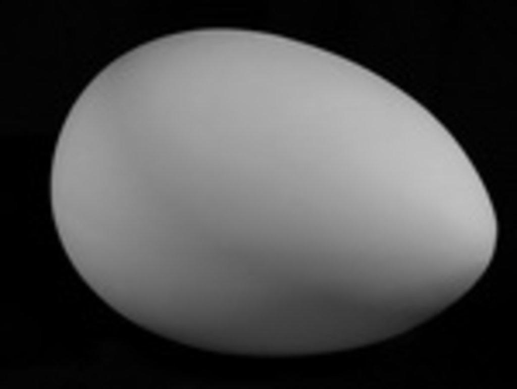 Гипсы: Яйцо в Шедевр, художественный салон