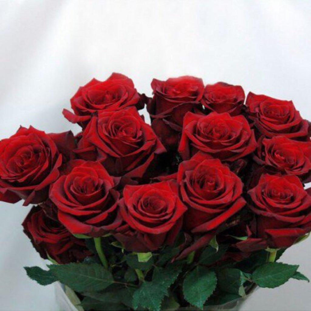 Цветы: Роза красная в Николь, магазины цветов