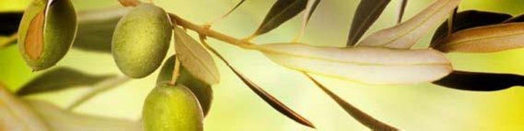Фартуки ЛакКом 4 мм.: Олива в Ателье мебели Формат