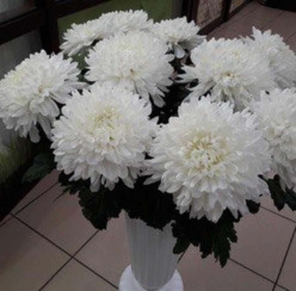 Цветы: Хризантема одноголовая в Николь, магазины цветов