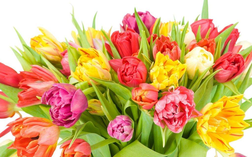 Цветы: Цветы в ТортExpress