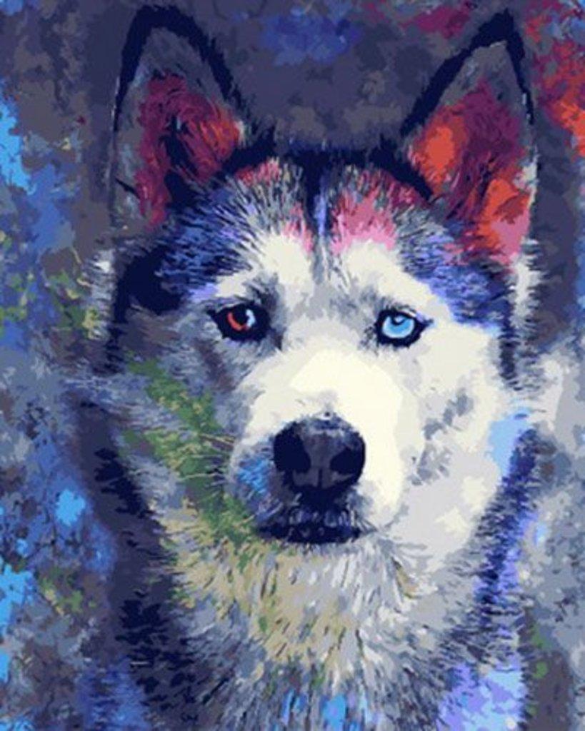 Картины по номерам: Картина по номерам Paintboy 40*50 Цветной хаски GX30357 в Шедевр, художественный салон