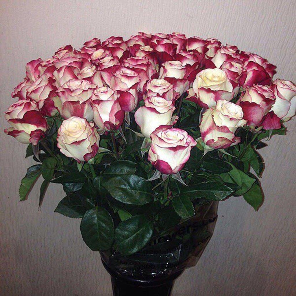 Цветы: Розы Бело-красные в Николь, магазины цветов