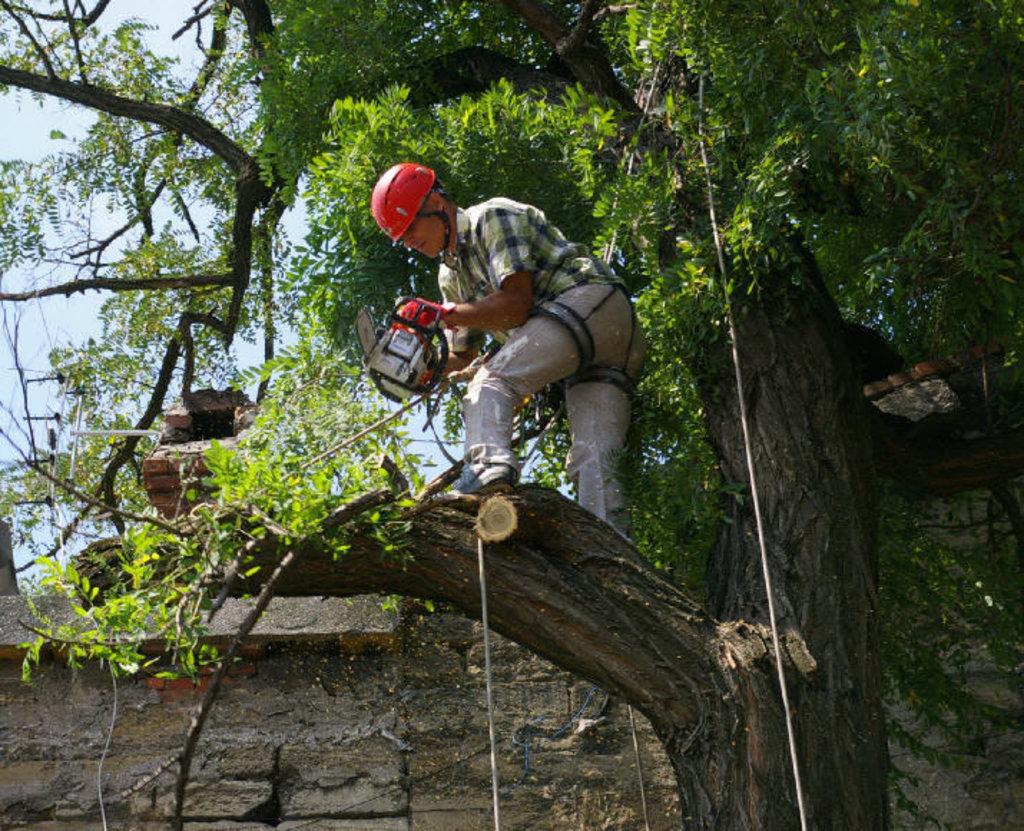 Работы по благоустройству территорий: Спил деревьев в А-профиль, капитальный ремонт и строительство
