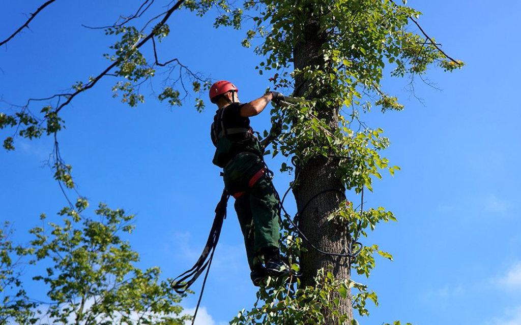 Фасадные работы: Кронирование и удаление деревьев в FloMASTER, ООО
