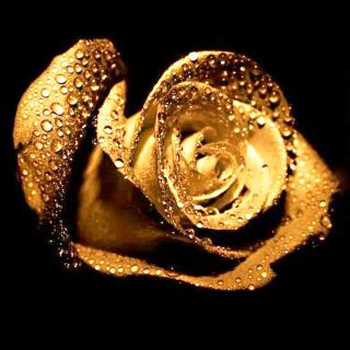 Логотип компании Цветы 24